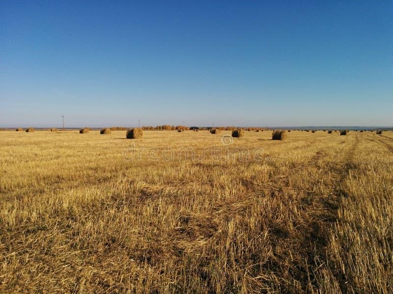 Tarwegebied in Rusland stock fotografie
