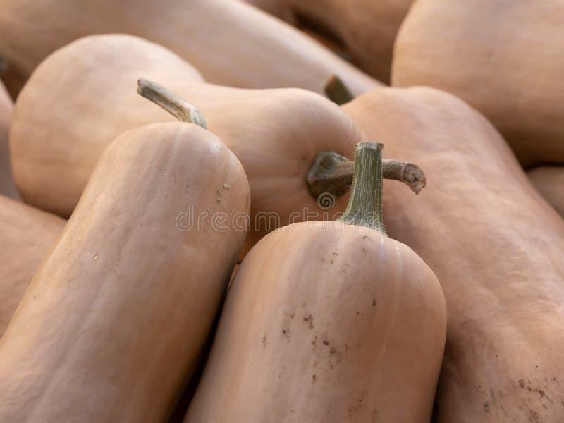 Tas de potiron de courge de Butternut, moschata de Cucurbita photos libres de droits