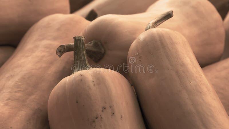 Tas de potiron de courge de Butternut, moschata de Cucurbita photo libre de droits