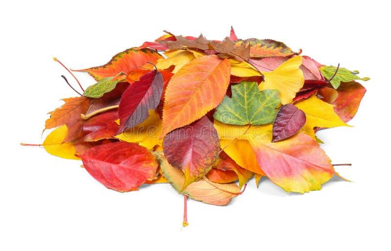 Tas des feuilles d'automne colorées images libres de droits