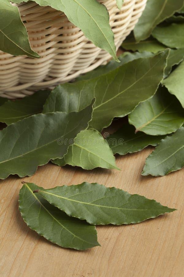 Tas des feuilles fraîches de Green Bay photo stock