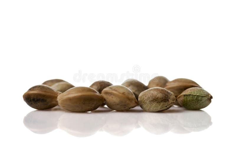 Tas des graines de cannabis de chanvre d'isolement sur le fond blanc photo stock