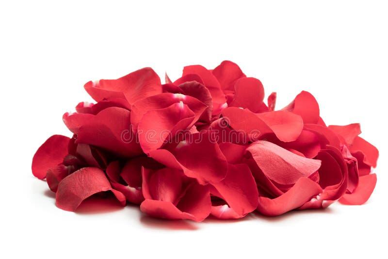 Tas des pétales de rose rouges d'isolement sur le blanc photos libres de droits
