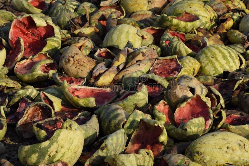 Tas des pastèques de décomposition Peau de melon Un champ abandonné des pastèques et des melons Pastèques putréfiées Restes du ha photo stock