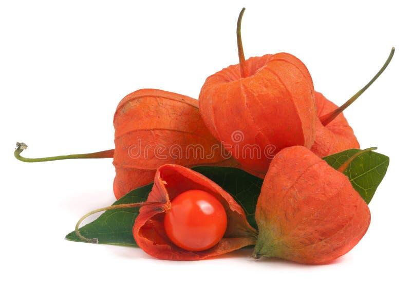 Download Tas Des Tomates De Cosse Ou Du Physalis Avec La Feuille D'isolement Sur Le Fond Blanc Image stock - Image du fond, lanterne: 77152159