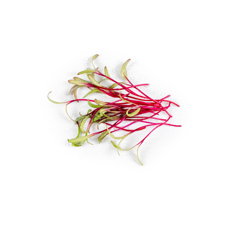 Tas des verts micro de betterave sur le fond blanc Concept sain de consommation du produit frais de jardin organiquement cultivé  image libre de droits