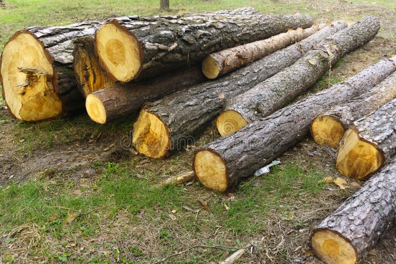 Tas en bois d'en gros plan horizontalement empil? longs par rondins dans la for?t images libres de droits