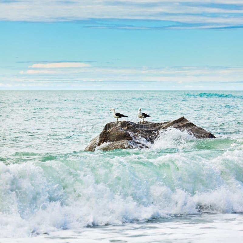 Tasman sea. Two albatroses on the rock. Tasman sea stock image