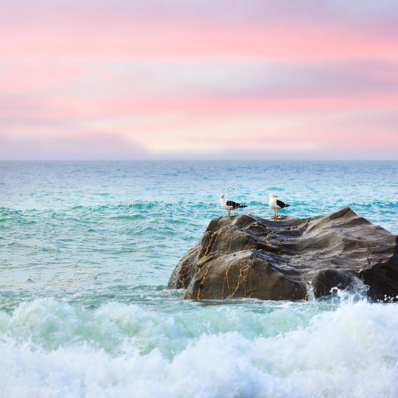 Tasman sea stock image