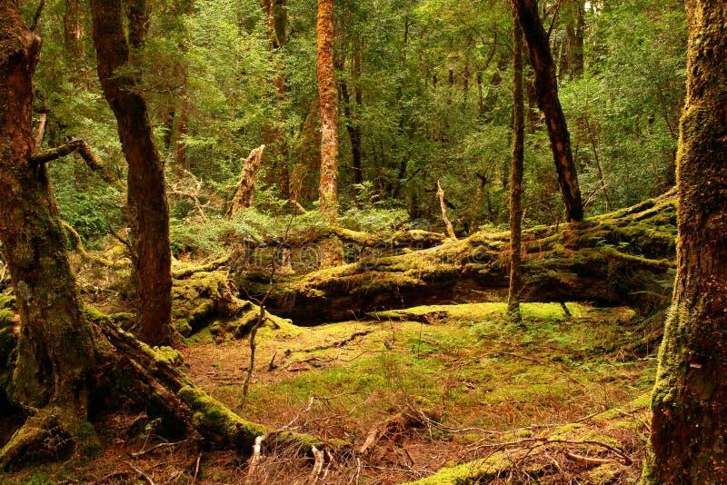 tasmania fotografia royalty free