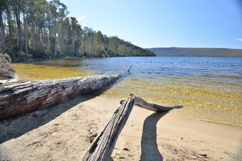 Tasmania drewna gałąź obrazy stock