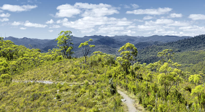 Download Tasmania Rain Forest Stock Image - Image: 15841011