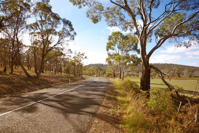 tasmanian land arkivfoto