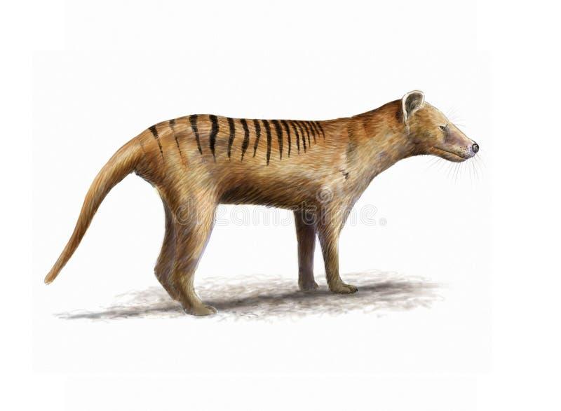 Tasmanian tiger vektor illustrationer