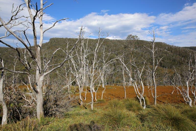 tasmanien lizenzfreie stockfotografie