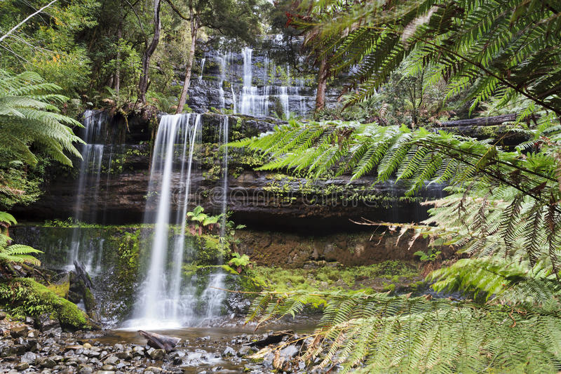 Tasmanien Russell Fall Ferns stockfoto