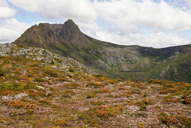 Tasmanien, Wiegen-Berg NP, Australien stockbilder