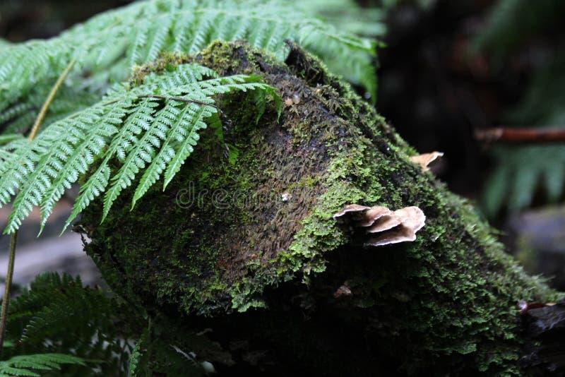 Tasmanische Wildnis lizenzfreies stockbild