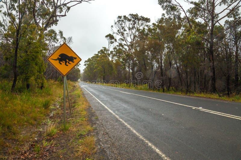 Tasmanischer Teufel-Überfahrt stockbilder