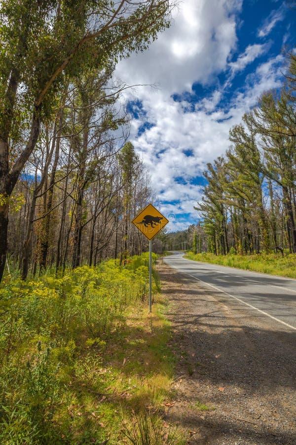 Tasmanischer Teufel-Überfahrtzeichen stockfotografie