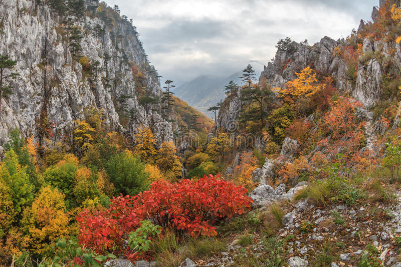 Download Tasnei Gorge stock image. Image of baile, mountain, forest - 34574689