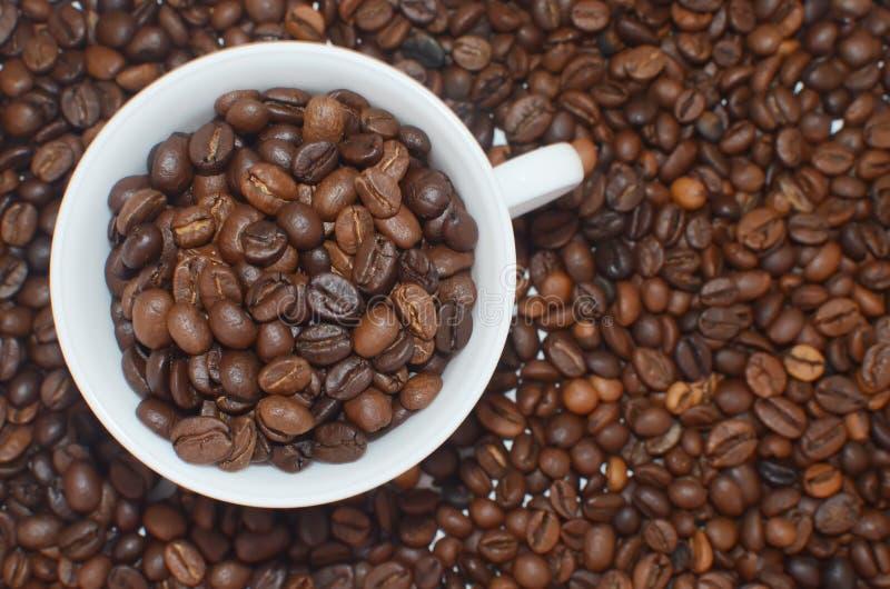 Tasse blanche pleine des grains de café sur le fond de haricots de coffe photo stock