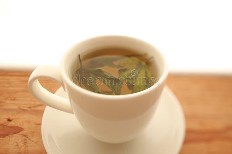Tasse chaude de blanc de thé d'herbe de chanvre de cannabis photographie stock