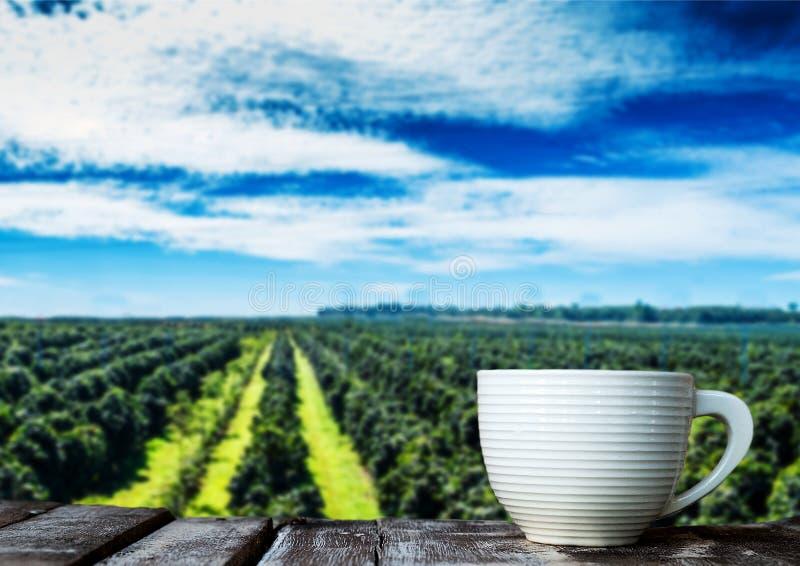 Tasse de café sur le plancher en bois dans la plantation de café avec la SK bleue images stock