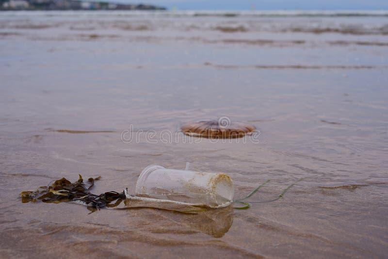 Tasse en plastique et méduses mortes sur la plage images stock