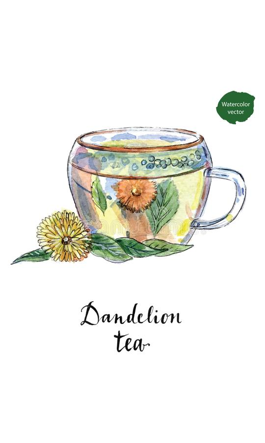 Tasse en verre de thé sain de tisane de pissenlit dans l'aquarelle herbal illustration stock