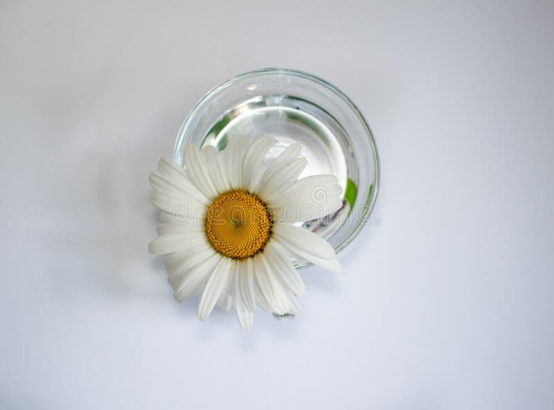 Tasse en verre transparente avec de l'eau la camomille et 7 photographie stock libre de droits