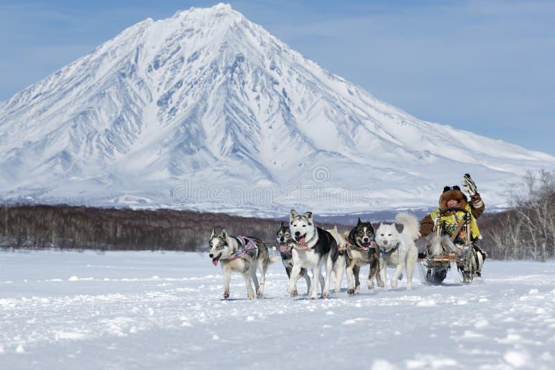 Tasse russe de disciplines de neige d'emballage de chien de traîneau, emballage de chien de traîneau de péninsule de Kamchatka Be photos libres de droits