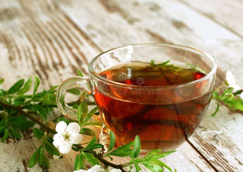 Tasse Tee und Frühling breiten sich auf altes hölzernes aus lizenzfreie stockfotografie