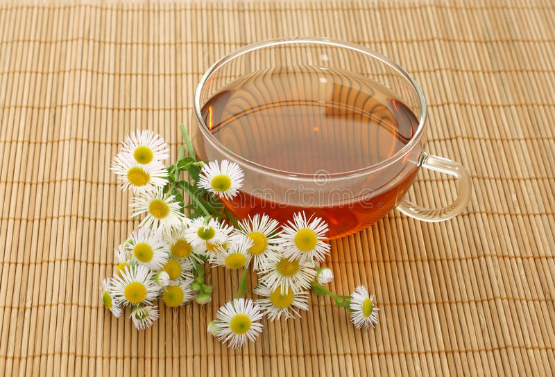 Tasse Tee und Kamille stockbilder