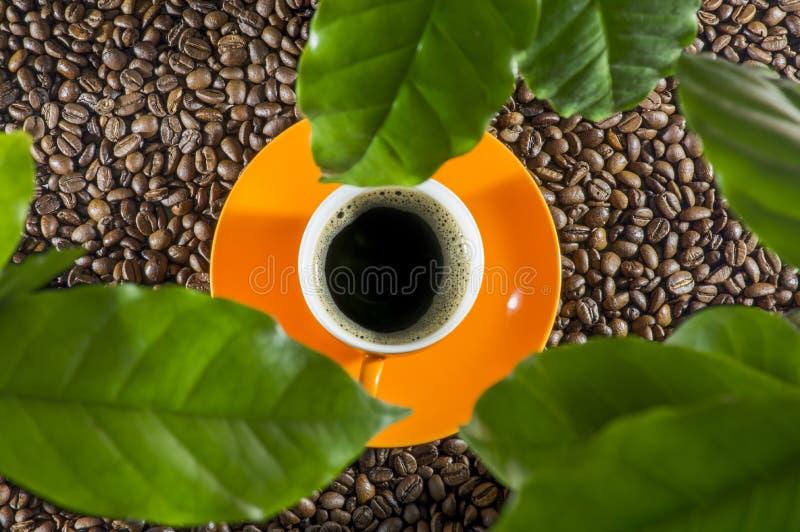 Tasses oranges de café très fort photographie stock