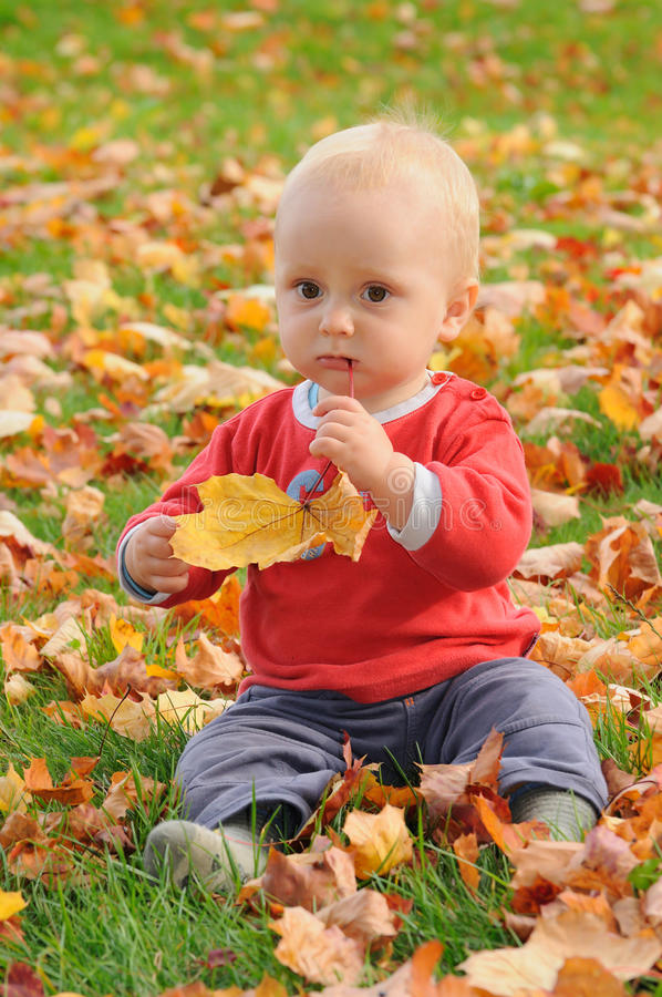Taste of autumn. Little child sitting on green grass with autumn colorful leaves, well being and tasting a leaf royalty free stock image