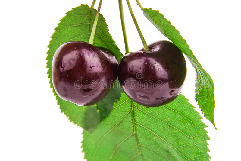 Tasty black cherry with laeves . background stock photography