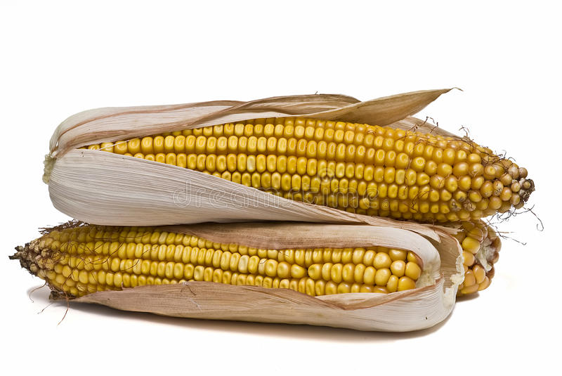 Download Tasty corn stock photo. Image of isolated, nutritional - 12476364