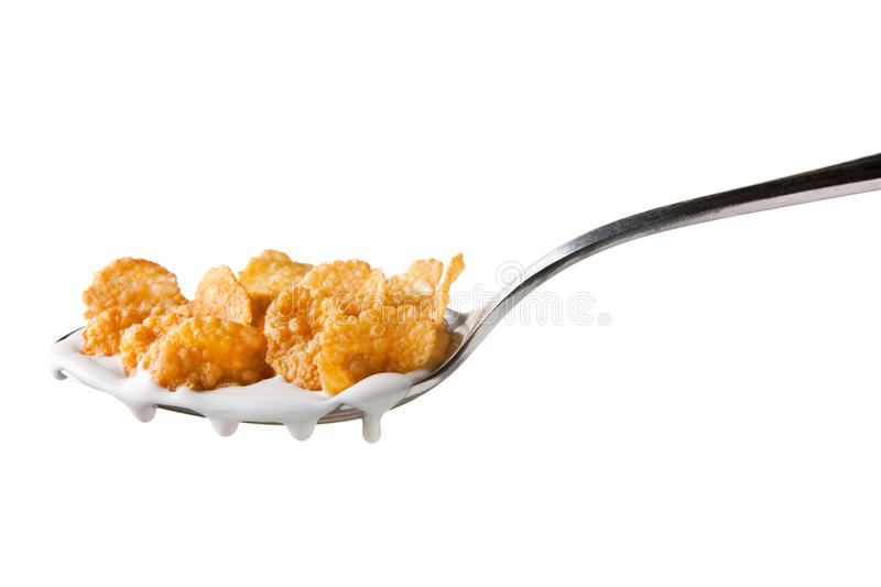 Tasty cornflakes in spoon royalty free stock photo