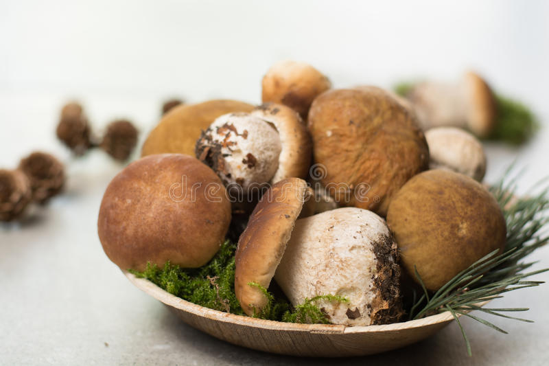 Tasty food - fresh porcini boletus oak muchrooms, high quality,. Ready to cook with rice, potatoes and in soup stock photo