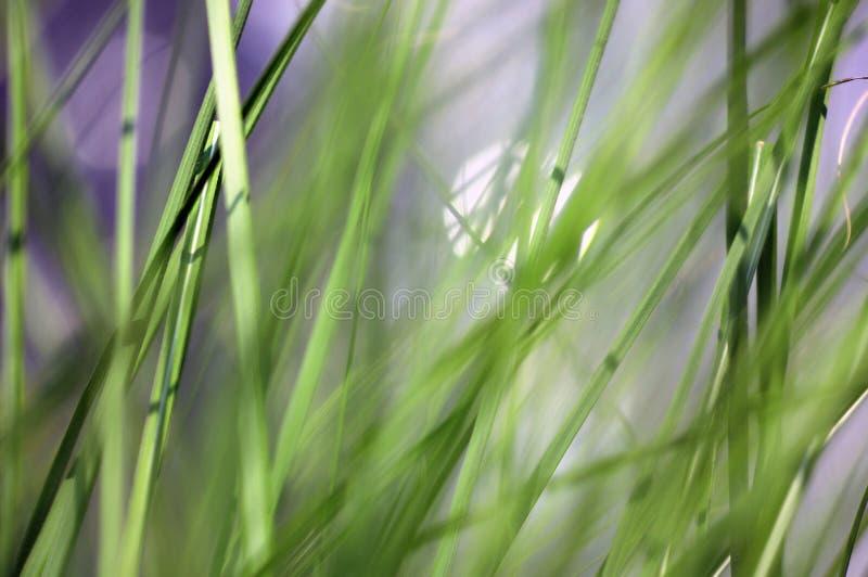 Tasty spring fresh green grass stock photo