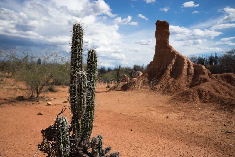 Tatacoa沙漠哥伦比亚 库存图片