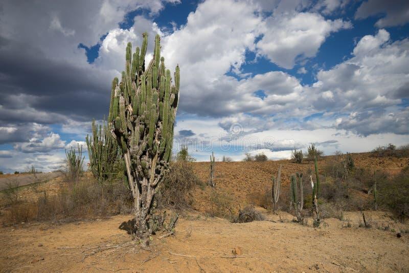 Tatacoa沙漠在哥伦比亚 免版税库存图片