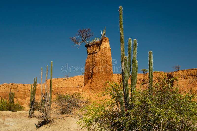 Tatacoa pustynia suchy miejsce Kolumbia obraz stock