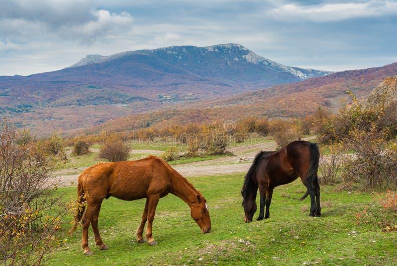 Tatar hästar som betar i höstliga berg i Crimean halvö fotografering för bildbyråer