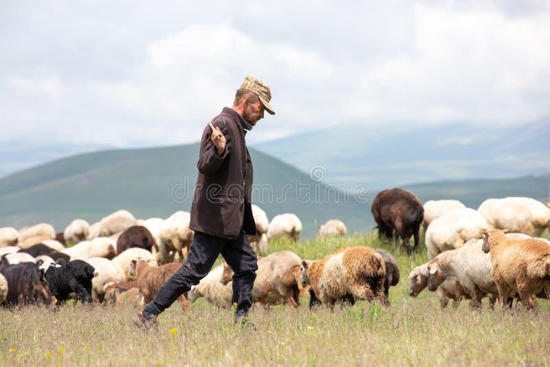 An Armenian sheep herder with his sheep. stock photos