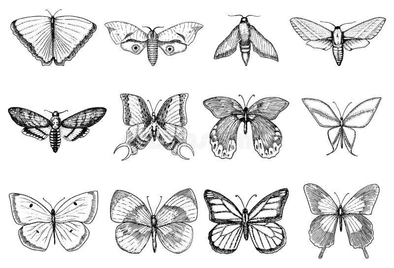 Tatoegering of bohot-shirt of scrapbooking ontwerp Mystiek esoterisch symbool van vrijheid en reis Vlinder of insect stock illustratie