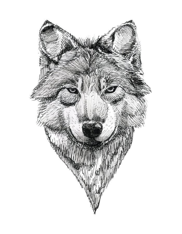 Tatouage ? l'encre noire Wolf Portrait tir? par la main illustration stock