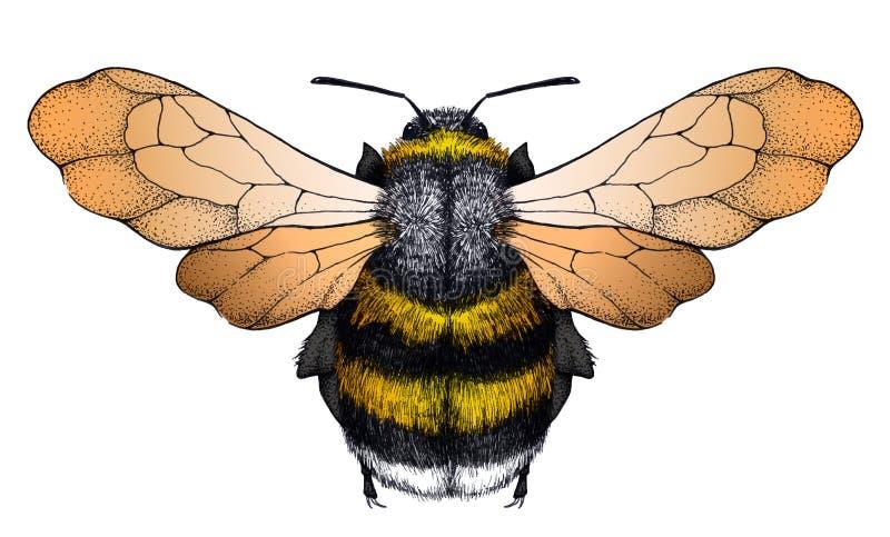 Tatouage d'abeille de miel Tatouage de Dotwork Symbole de diligence illustration stock