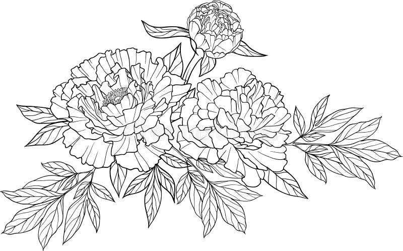 Tatouage réaliste de fleur de pivoine du dessin trois illustration de vecteur